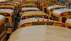 buses