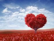 arbol_amor