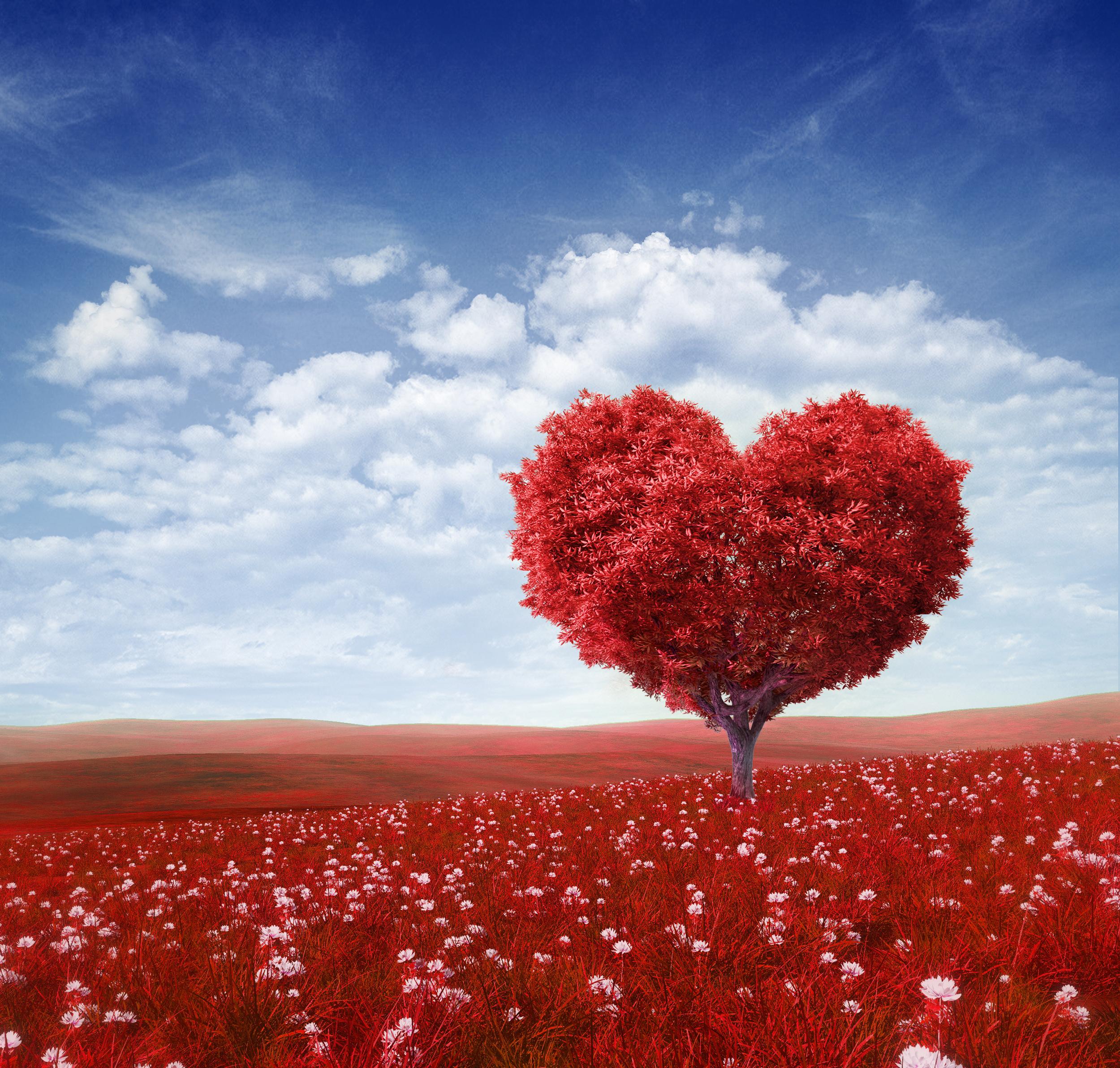 """""""Stoner, tú serás maestro"""": la enseñanza como enamoramiento"""